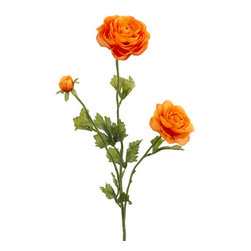 Silk Plants Direct - Silk Plants Direct Ranunculus (Pack of 12) - Orange - Silk Plants Direct specializes in manufacturing, design and supply of the most life-like, premium quality artificial plants, trees, flowers, arrangements, topiaries and containers for home, office and commercial use. Our Ranunculus includes the following: