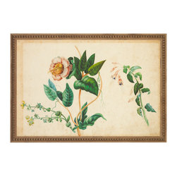 """J. Pocker - """"Botanical"""" Print - A graceful botanical print is a versatile piece to grace your walls. The detail is striking and the antique style is reminiscent of old botany journals. Picked from the well-known Interior Designer Bunny Williams' personal collection, you too will love these blossoms."""