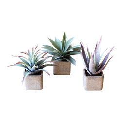 Hip To Be Square Plant Pots - Set of 3 - When you're looking for no-maintenance, rather than low-maintenance, the Hip to be Square Plant Pots have you covered. The set of three artificial succulents look deceptively real in their chic square pots, allowing you to fool guests with your green-thumbed skills without denying your style credentials.