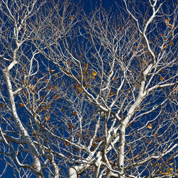 PrintedArt - Dendritic Patterns of American Beech - Print is made with archival pigment inks for best color saturation and contrast with a 75-year guarantee against fading or discoloring. Mounted on light-weight but rigid aluminum dibond board to create a float-on-the-wall piece of art. Also available face-mounted with acrylic.