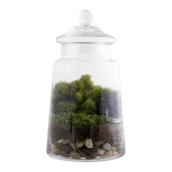 """Twig Terrariums - Masterpiece - Masterpiece features our animated master sculptor chipping away at Italian marble to reveal the perfect girl within. This apothecary jar is 11"""" tall and 6.5"""" wide and uses petrified wood as the base for the sculptor and statue, it's certainly bound to leave an impression Keep in mind that the petrified wood can (and probably will) vary in shape and color.  Figures may vary, but we promise they're all adorable."""