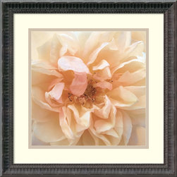 Amanti Art - Rebecca Swanson 'Promise Rose' Framed Art Print 18 x 18-inch - Add a beautiful touch to any wall with vibrant white and creme colors from this photograph 'Promise Rose', as captured by Rebecca Swanson.