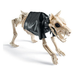 """Grandin Road - Costume for Small Halloween Skeleton Dog - Pleather jacket and studded collar costume for skeleton dog. Tailored for our 12""""H Skeleton Dogs. Jacket and studded collar stay put with adjustable closures. Not suitable for real pets. Transform your bony pooch into a tough dog with our costume for skeleton dog. The two-piece ensemble includes a black pleather motorcycle jacket and a latex studded collar. Rex will be so excited to """"strut"""" his stuff on the Halloween runway – and you'll be excited to add a little extra flavor to your display.  .  .  .  . Imported."""