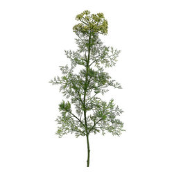 Silk Plants Direct - Silk Plants Direct Dill (Pack of 6) - Silk Plants Direct specializes in manufacturing, design and supply of the most life-like, premium quality artificial plants, trees, flowers, arrangements, topiaries and containers for home, office and commercial use. Our Dill includes the following: