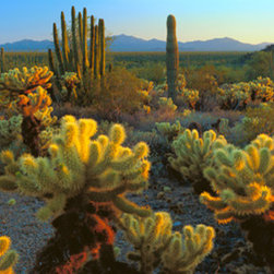 Murals Your Way - Sonoran Desert, Organ Pipe National Monument, AZ Wall Art - Photographed by Alain Thomas, the Sonoran Desert, Organ Pipe National Monument, AZ wall mural from Murals Your Way will add a distinctive touch to