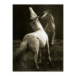 Playing Pair Horse Photo Wall Art, Small Unframed