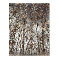"""Avalon Nature Photography - Forest Series: Autumn Oaks: Photography on Canvas, 38"""" X 52"""" X 1.5"""" - Contemporary Fine Art Clear Water Reflection Forest Series: Autumn Oaks. 1 of 3 in Series."""
