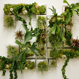 Living Walls (various) -