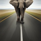 Limitless Walls - Elephant On The Run Wall Mural - Our innovative wall murals are the only pressure sensitive canvas wall coverings on the market. Get the luxurious look and feel of canvas without cleaning out your wallet. Our canvas is 14 mils thick making it easy to install and creates a protective barrier for your walls. Every wall mural is completely removable and repositionable countless times without damaging your walls and paint. Our products are  green being P.V.C. free.