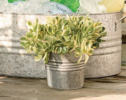 Eclectic Galvanized Metal Cachepot - A fixture on American farms, galvanized metal has earned our affection for its simple style. Its ability to stand up to moisture makes it ideal for use as a planter fitted with container plants, any-weather outdoor storage or an ice-filled cooler for drinks. Crafted of galvanized iron. Encircled by stamped ridges. Catalog / Internet Only.