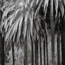 """the palms"" Artwork - Close up of a mass planting of palm trees showing design patterns and texture in this black and white image.  Printed on matte fine art photo rag with archival inks."