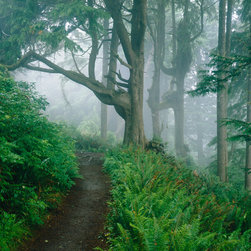 Murals Your Way - Forest Trail, Cape Lookout State Park, OR Vinyl Wall Decal, Wall Art - Created by Ray Atkeson. Forest Trail, Cape Lookout State Park, OR wil be a great addition to any room in your home or business