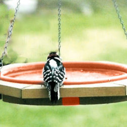 Songbird Essentials - Mini Hanging Bird Bath Clay Tray - Hang a bird bath in a tree close to your window so you can enjoy watching the birds drink and bathe. Cedar frame is 20 inch wide and pan is 2 1/2 inch deep. Comes with a clay pan and has a 3 point chain suspension.