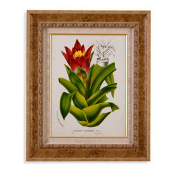 Bassett Mirror - Bassett Mirror Framed Under Glass Art, Tropical Bromeliad II - This tropical-style print of a Bromeliad, part II in the series, features a bright and vivid close-up illustration of the unique plant accompanied by a few notes with details about the plant. In the background, there is a sketch of the form the plant takes from a distance. The piece is beneath glass in a tropical-style frame with gold embellishments.