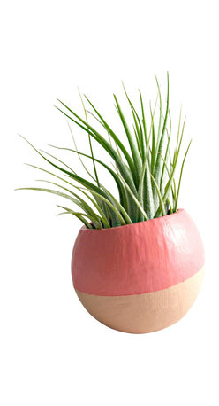 Mini Ombre Air Plant Pod // Peach Melon (with Air Plant) - These air plant pods are natural pods that have been handpainted and repurposed into an air plant planter so each pod is unique and organic in size/shape. The natural vessels make great displays for air plants. The plant pods would look great displayed along a shelf, desk, or window sill.