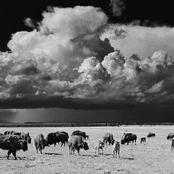 """Buffalo, Golondrinas - Large-Scale, Limited Edition Photography - This very large 44"""" x 16"""" wildlife photograph is a scene out of the old west.  A beautiful, sweeping vista that feels very dramatic, perfect for a large home or office space."""