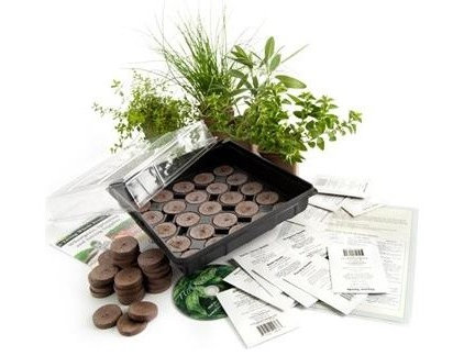 Contemporary Plants by Herb Kits