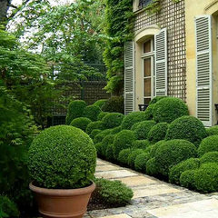 traditional  boxwood