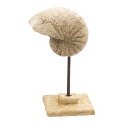 """Stone Cast Nautilus Shell on Stand - The nautilus shell on stand sculpture measures 7"""" x 12.5"""". It is made of stone cast. It will add a definite nautical touch to whatever room it is placed in and is a must have for those who appreciate high quality nautical decor. It makes a great gift, impressive decoration and will be admired by all those who love the sea."""
