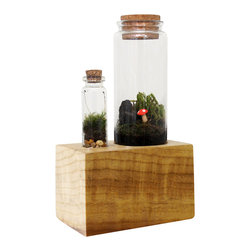 Moss + Twig - Terrarium Kit With Wood Base - Add life to your desk, kitchen or coffee table and design your own miniature table top terrarium! Includes: