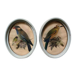 Antique Bird Prints - A Pair - For the bird lover, antique hunter, or whimsical daydreamer... this pair of antique framed bird prints will sit pretty in any environment. Prints are from the early 1800's, accented with lovely pale aqua oval frames.