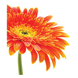 Daisy Design Photo Panel Wall Decals