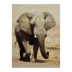 Oriental Furniture - Walking Elephant Canvas Wall Art - An African bush elephant, trunk curled and ears extended as it travels. Image is given a sepia tone and printed using the latest ink jet technology to provide a gallery quality print. Sharp, clear wall art for a wildlife themed living room, office or study.