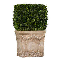 Uttermost Boxwood Hedge Planter - Preserved, natural evergreen foliage potted in a stone finished, ceramic planter. Preserved, natural evergreen foliage potted in a stone finished, ceramic planter.