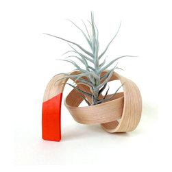 Hand-Bent Scribble Air Plant Holder in Orange - Slender softwood is slowly bent by hand, then painted in a bold shade of orange, to create this fantastic, knotty band to hold your favorite air plant. It includes an easy-care Tillandsia plant whose loosely waved leaves complement the tight twist of the planter.