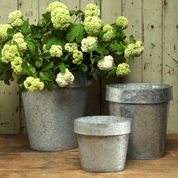 Galvanized Oval Container - 9 x 5.5 - An unconventional narrowing of the rim gives the Galvanized Oval Container an unusual elongated shape that makes it easy to be creative in designing your container gardens and cachepot displays.  Made from galvanized tin, this planter mimics the lipped shape of the simple garden pot, but the unusual choice of material adds the weathered edge of metallic texture to your look.