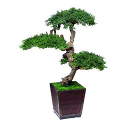 Senshi Bonsai - Preserved Bonsai - Presenting a large preserved bonsai: The Senshi Bonsai.