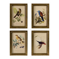 Wooden Bird Plaques - Set of 4 - Delicate hand painted transfer bird prints in gold frames