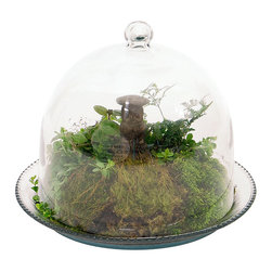 Achla - Bell Jar Terrarium III - Clear glass Bell Jar can protect your young or fragile specimens from harsh changes in temperature and humidity. Create a micro garden as a terrarium. Based on the traditional shape used for 17th and 18th century garden cloches. The jar can be lifted off of the matching dish for easy access to plants. Made from clear glass. Construction Material: Glass. No Assembly Required. Dome: 10 in. Diam. x 9 in. H. Dish: 12.25 in. Diam. Dish
