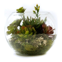 Dalmarko Designs - Arranged Succulents in a Bubble Planter - This unique piece is both beautifully designed as well as a nice complement to any space.