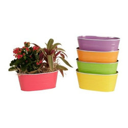 Wald Imports Double 6 in. Metal Planter - Assorted - Set of 5 - Give the vibrant colors of your spring flowers the playful pants that they deserve with the Wald Imports Double 6 in. Metal Planter - Assorted - Set of 5. This set of five planters features all-metal construction, a durable, painted finish and liners to help prevent damage due to moisture.About Wald ImportsOver 30 years of specializing in floral, gift basket and specialty containers has given Wald Imports a reputation for helping their customers find the best way to present gifts and floral arrangements, and it really shows! By using a wide range of materials in almost any size or style, a Wald Imports container is practically a gift all by itself. Based in Washington since its inception in the 1970s, this consumer-driven company has been helmed every day by a member of the Wald family who is dedicated to making floral arrangements and gifts into the thoughtful and enjoyable pieces that we all want them to be.