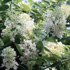 The 13 Best Summer-Blooming Shrubs for Your Garden
