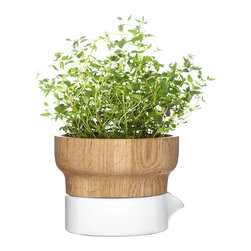 Sagaform - Fix Herb Pot - Grow fresh herbs in your kitchen with this beautiful pot, featuring a handsome oak top and stoneware base for drainage.   3'' H x 5'' diameter Oak / stoneware Hand wash Imported