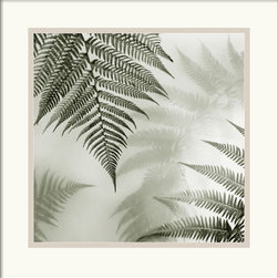 Amanti Art - Ferns No. 1 Framed Print by Alan Blaustein - Alan Blaustein's still life photography evokes a contemplative mood and a sense of tranquility and timelessness.