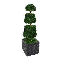Laura Ashley - 50 in. Natural Spiral Boxwood Cone Topiary - Fiberstone Planter - This preserved boxwood topiary will instantly liven up your home or office decor.. No need to shop for a planter separately - comes complete with decorative planter. Comes with a Spritzer; all you have to do is spray it once a month.. All Natural Preserved Boxwood Leaves.. 14 in. L x 14 in. W x 50 in. H (12 lbs.)