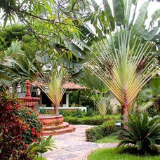 PlantFiles: Picture #4 of Travelers Palm (Ravenala madagascariensis)