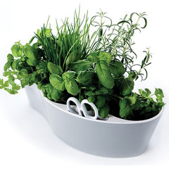 contemporary plants by shop.royalvkb.com