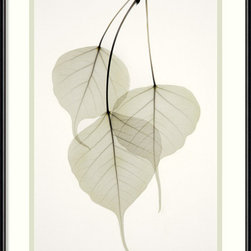 Amanti Art - Bo Tree Framed Print by Albert Koetsier - Exquisitely delicate, these tender, heart-shaped leaves communicate the beauty in fragility. This X-ray print features three sacred Bodhi tree leaves cascading down from a branch, their whisper-thin exteriors exposing a remarkable inner structure. Hang it in your bedroom or guest room for a peaceful, modern look.