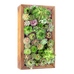 luludi living frames - Luludi Living Frames Slim Secret - our slim secret garden is a flat bottomed box constructed from recycles redwood for indoor or outdoor use. the unstained simplicity of the wood frames the natural beauty of our cacti and succulents.