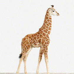 Baby Giraffe No. 1 - Giraffe art brings the perfect safari vibe to a room.