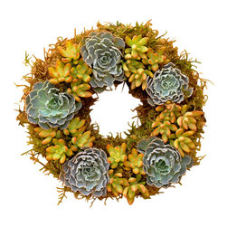 "Flora Pacifica - Rosea Succulent Wreath - This wreath features the Echeveria Rosea which has beautiful ruffled leaves and is surrounded by Sedum Nausbaumeranium.  It is approximately 12"" in diameter and contains 30 succulent plants."