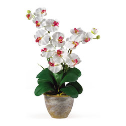 TwentyOne7 - Double Stem Phalaenopsis Silk Flower Arrangement, White - This 25 in double stem phalaenopsis silk orchid flower arrangement is nothing short of an explosion of color. Expertly arranged, this piece was designed to enhance any space. Each silk flower arrangement comes stacked with two amazing phalaenopsis stems each with 6 flowers and 2 buds. Finished with a gorgeous glazed ceramic vase this item is not to be missed. So whether you're looking for a gift or just want to perfect your decor...you're only one click away.