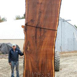 English Elm Wood Slab - ENGLISH ELM (Ulmus Procera)