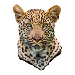 Walls Need Love - Leopard Mount Decal - Talk about seeing spots! This hypnotic wall decal gives you the rare opportunity to stare head on at a leopard's intent gaze.