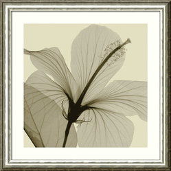 """Hibiscus"" Framed Print by Steven N. Meyers"