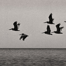 The Andy Moine Company LLC - Brown Pelicans Salton Sea California Fine Art Black & White Photography, 20x30, - Black and White Fine Art Photography captured with 35MM Ilford Film and reproduced in Limited Editions on Canvas OR Brushed Aluminum. This is a beautiful Long Lens composition of a flock of Brown Pelicans Mid-Flight at the Salton Sea in Southern California. Sitting 226 feet below sea level, it's water is known to be much saltier than that found in the nearby Pacific Ocean, yet that doesn't seem to deter its most frequent patrons of the feathered and winged variety.